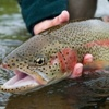 Trout & Salmon Fishing