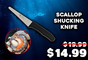 Victory Scallop Shucking Knife 11cm